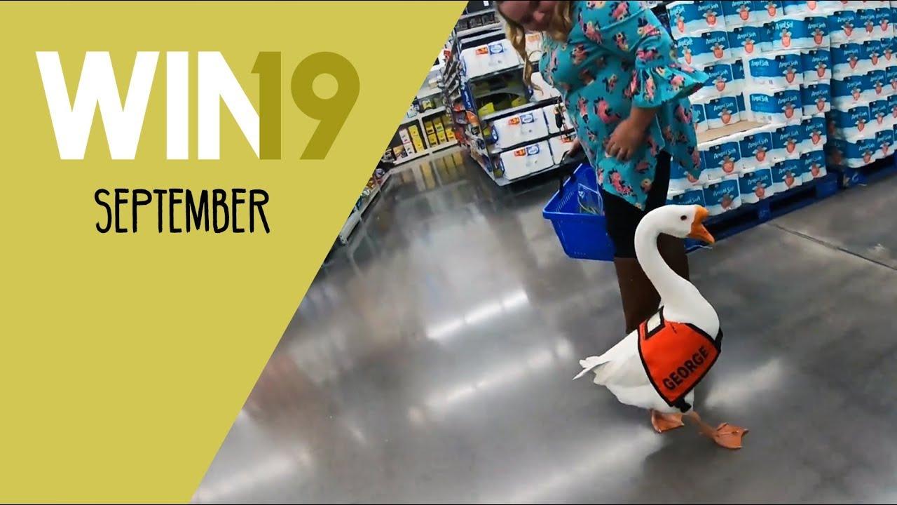 Win-Compilation September 2019